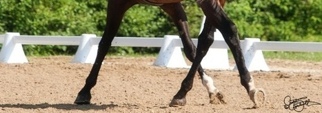 The Leg Yield with a Half Circle | Equine massage | Scoop.it