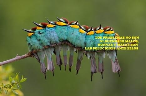 Cie Moreno   Facebook   matematica y educacion   Scoop.it
