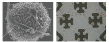 Nanomedical Cognitive Enhancement | Antropologia Cognitiva | Scoop.it