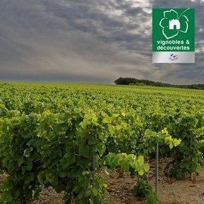 Tweet from @ChampGremillet | Images et infos du monde viticole | Scoop.it