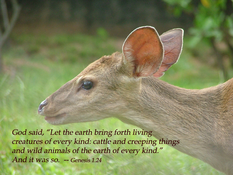 """Genesis 1.24 Poster - """"Let the earth bring forth living creatures of every kind..."""" 