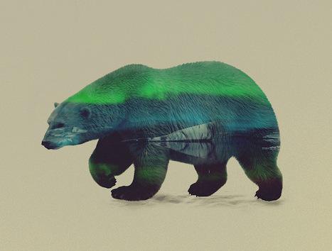 Incredible Double Exposures Merge Wondrous Wild Animals with Stunning Scenery | Le It e Amo ✪ | Scoop.it