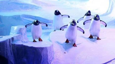 Fake ice 'too slippy' for penguins | Quite Interesting News | Scoop.it