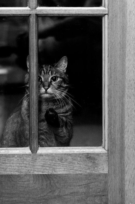 18 Beautiful Photos Of Animals Looking Through Windows | ART  | Conceptual Photography & Fine Art | Scoop.it