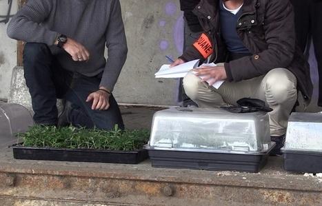 VIDEO. Alfortville : 900 pieds de cannabis découverts par la douane   Charentonneau   Scoop.it