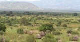 farmlandgrab.org | More cases of land grabs in South Sudan | Africa and the new imperialists - same as the old imperialists. | Scoop.it