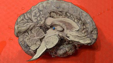 Understanding the Brain: The Neurobiology of Everyday Life | Social Neuroscience Advances | Scoop.it