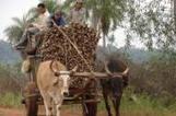 La saveur coopérative du sucre paraguayen | Economie Responsable et Consommation Collaborative | Scoop.it