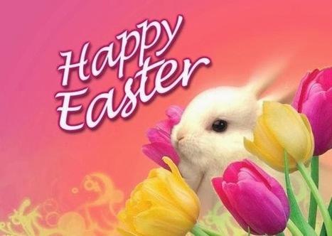 Best Easter Bunny Pictures | ART | Scoop.it