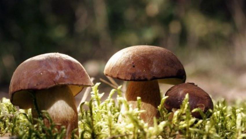 Food Fundamentals: Mushrooms   Article   Cultur...