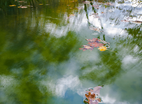 How to take an Impressionist Photo - Kat Clay | Impressionist camera | Scoop.it