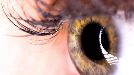 Stem Cell Discovery Could Restore Sight To The Blind | Science | Scoop.it
