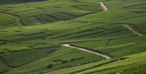 Champagne : La plus vieille AOC de France | Travel Bites &... News | Scoop.it