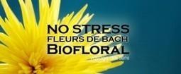 Fleur de Bach contre le stress - Voyage des sens | Escale Sensorielle...une boutique pleine de sens | Scoop.it