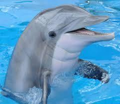 Scientists amazed by how much dolphins remember - Apple Balla | los animales | Scoop.it