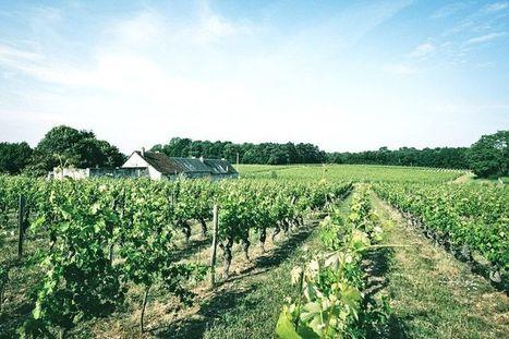 Eric Santier : un ex-commercial à Dubai devient vigneron dans La Loire | Le Mag Les Grappes | Images et infos du monde viticole | Scoop.it