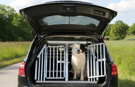 Keeping your pets safe on a long journey | Bristol Businesses | Scoop.it