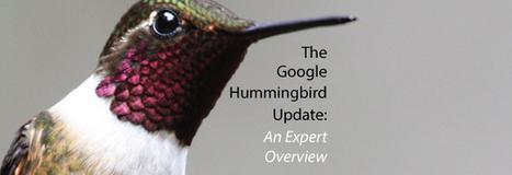 The Google Hummingbird Update - An Expert Overview by Vertical Measures | bernardpiette | Scoop.it