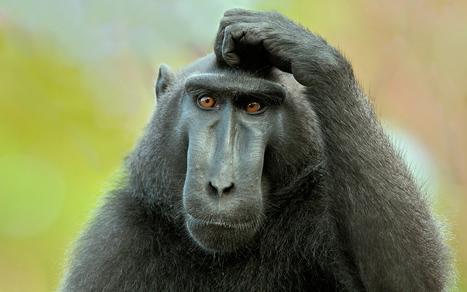 Gaz de schiste et santé: l'AFMP (foreurs) dénonce des contre-vérités - Romandie.com | Pétrole et gaz de schiste | Scoop.it