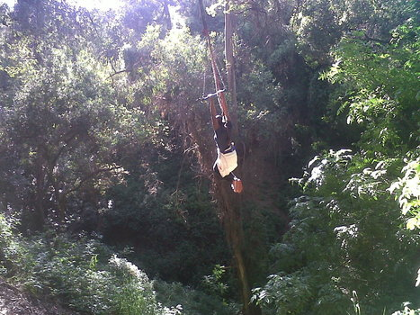 Rainforest Hike in Los Angeles | Los Angeles | Scoop.it