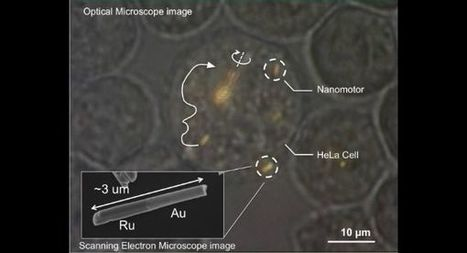 Scientists plant microscopic cell motors in human tissue - BreakingNews.ie | Cell structures | Scoop.it