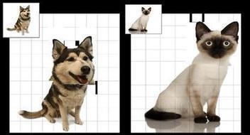 teachwithyouripad - Image Manipulation Apps   IKT och iPad i undervisningen   Scoop.it