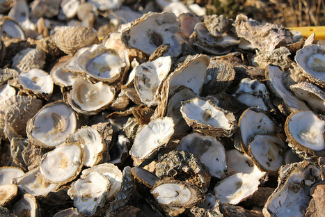 Oysters Don't Have Ears But Still Use Sound to Choose Their Homes | All about water, the oceans, environmental issues | Scoop.it