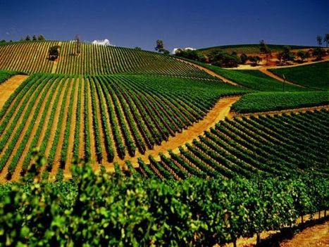 5 up-and-coming California wine regions on our radar - USA TODAY | International Wine | Scoop.it