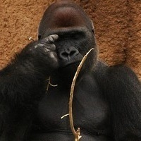 Ape hand gestures reveal where humans evolved language | Psychology and Brain News | Scoop.it