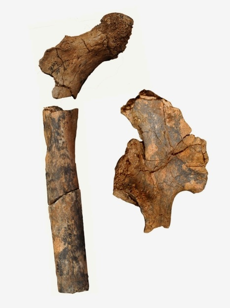 Ancient fossils reveal diversity in the body structure of human ancestors | Cultural Worldviews | Scoop.it