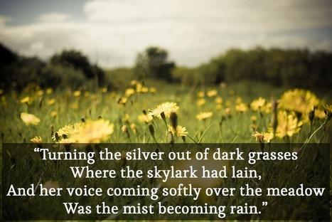 Irish Poetry: 9 most beautiful lines | Just Story It! Biz Storytelling | Scoop.it