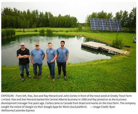 Lacombe Express  - Smoky Trout Farm success story turns heads at Google   Eye on Alberta #Tech   Scoop.it