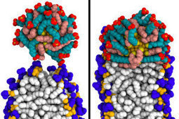More than glitter: How gold nanoparticles easily penetrate cells, making them useful for delivering drugs | Therapeutic peptide | Scoop.it