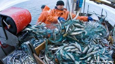 'Overfishing is a problem across the EU' - Deutsche Welle | geo class | Scoop.it