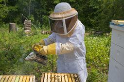 Pathogenic plant virus jumps to honeybees, may explain bee population decline - ASM (2014)   Ag Biotech News   Scoop.it
