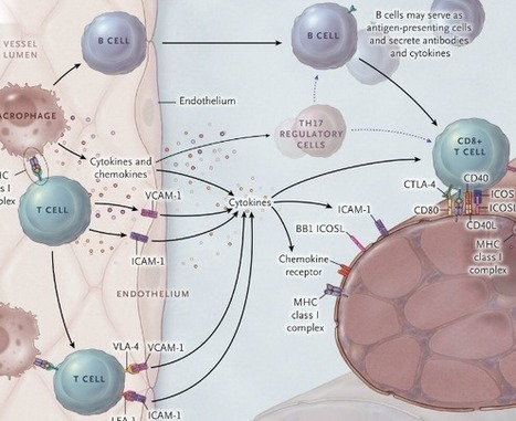 Inflammatory MuscleDiseases   Good bacteria bad bacteria   Scoop.it