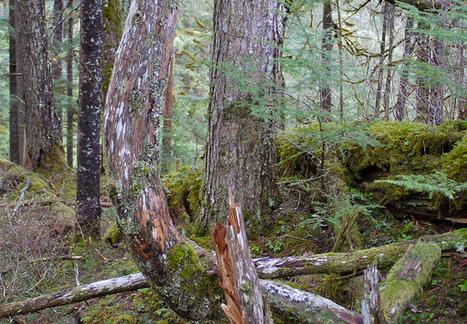Le secteur forestier utilisé pour esquiver les objectifs climatiques   Confidences Canopéennes   Scoop.it