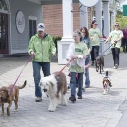 Dog lovers walk for Camden-Rockport animal shelter fundraiser - Bangor Daily News | Animal Rescue Web Digest | Scoop.it