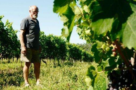 Les vignes et la lune | Agriculture en Dordogne | Scoop.it