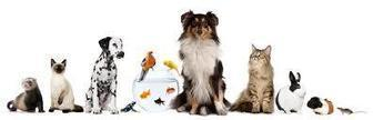 The Health Benefits of Owning a Pet | Cats Meow | Scoop.it