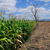 Study highlights food risk hotspots | Agricultural Biodiversity | Scoop.it