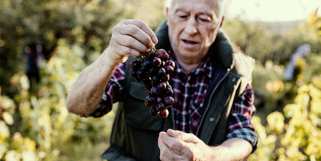 Wine Growers Are Just As Important As Winemakers | Vitabella Wine Daily Gossip | Scoop.it