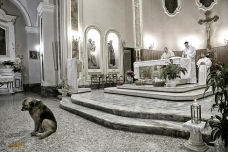Dog Attends Daily Mass at Church Where Dead Owner Used to Go | Strange days indeed... | Scoop.it