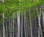 Genome of Chinese bamboo decoded - UPI.com | Plant Genomics | Scoop.it