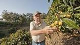 Market Watch: Above the ocean in Malibu, a rare orchard of loquats | On the Plate | Scoop.it