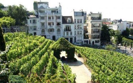 Montmartre célèbre sa cuvée de rosé en poésie | Le vin quotidien | Scoop.it