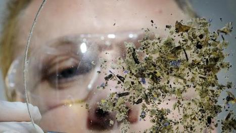 Synthetic cannabis banned in SA | Mental Health and Substance Use Issues in Youth | Scoop.it
