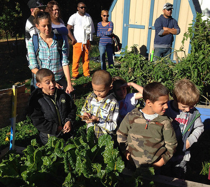 The Kindergarten Initiative: Connecting Students and their Families to the Worcester Food Environment | School Gardening Resources | Scoop.it
