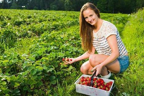 Ripe for the picking: How and where to find the best fruit picking regions in Australia | Finding Part time work in Australia | Scoop.it