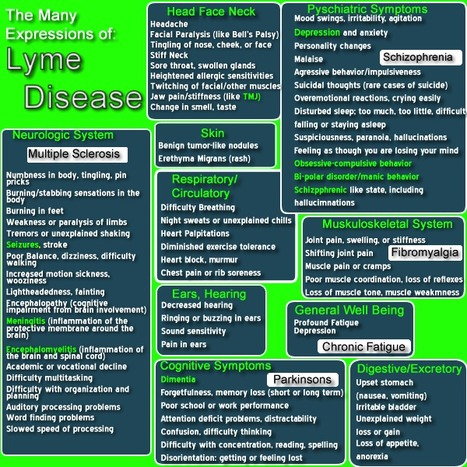 Multiple Sclerosis and Lyme Disease: The Same Disease? | Natural Health | Scoop.it